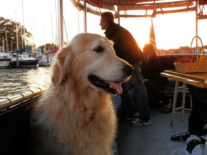 Cruises on the Bay by Watermark are Pet Friendly